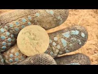 Поиск старинных монет с новой катушкой! №35