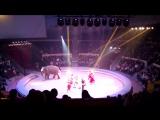 ВПЕРВЫЕ ЗА 15 ЛЕТ ДОЛГОЖДАННОЕ ЦИРКОВОЕ ШОУ Андрея Дементьева- Корнилова Инди-ра. #Самара #цирк #индира