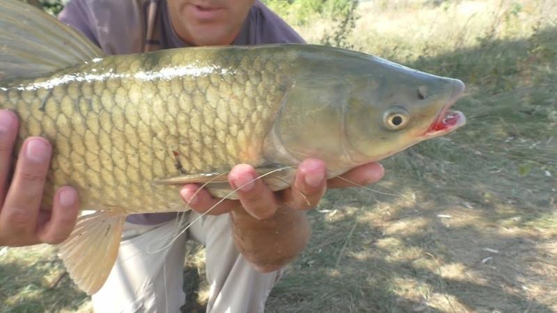 Каша-ассорти для рыбалки. Белый амур , карп и толстолобы
