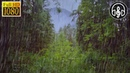 Нежный Шум Дождя Звуки Природы Дождь 8 Часов Для Снятия Стресса и Сна