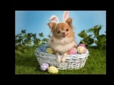Here Comes Peter Cottontail - By Gene Autry - Happy Easter 2013