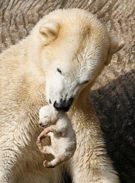 Мама-медведица и малыш