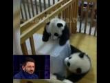 Галустян озвучивает панду