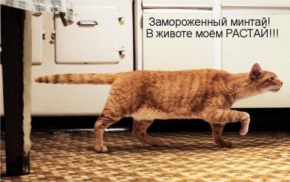 Кошачий юмор - Страница 4 M8qNEpah6us