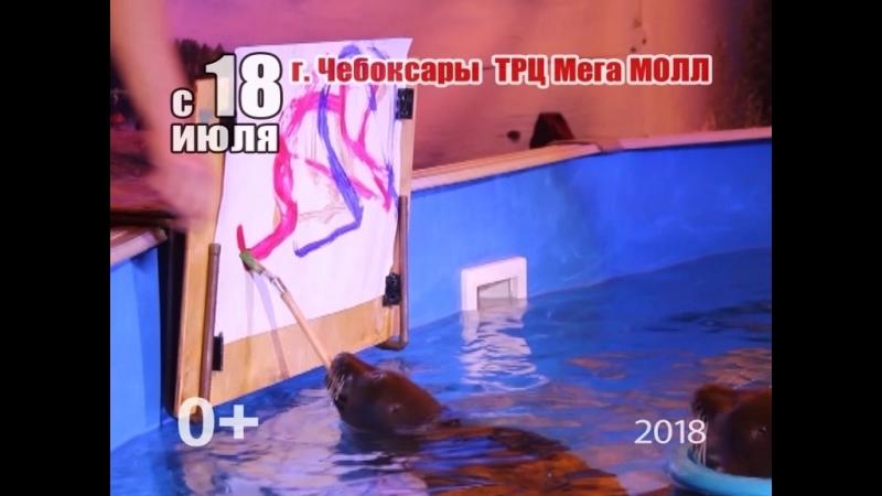 Г. ЧЕБОКСАРЫ С 18 ИЮЛЯ Нерпинарий расположен на нижней парковке ТРЦ МЕГА МОЛЛ