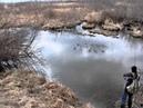 Клюнул щуренок на бобровой плотине