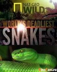 Фильм Самые опасные змеи в мире