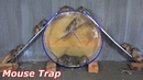 Mouse Trap with Plastic Box | DIY make A Mouse Trap Homemade | Idea Mouse Trap | Funny Mice