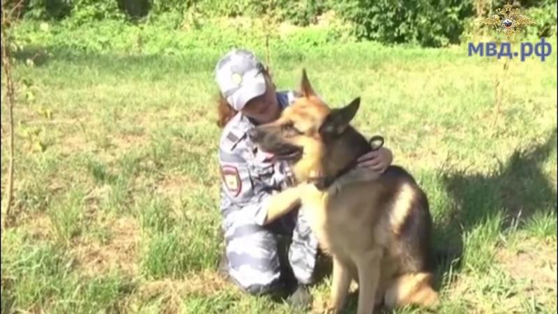 Во Владимире полицейский-кинолог со служебной собакой помогли найти мужчину, заблудившегося в лесу