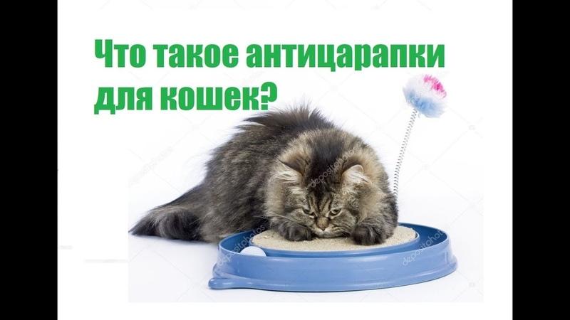 Что такое антицарапки для кошек и как их использовать?