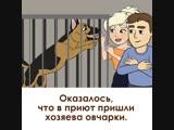 😢😢 Собаки — самые преданные и верные друзья. 🐶