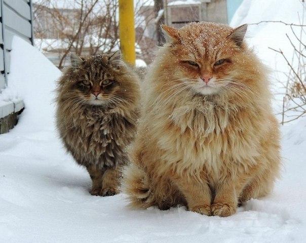 Внезапно. Вот такая необычная колония рыжих обнаружилась под Барнаулом: ↪ Настоящий сибирский шик!