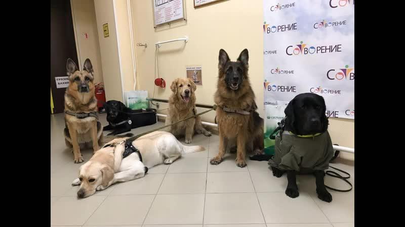 Ответ от Группы владельцев собак проводников Новосибирска