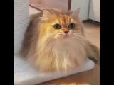 Был бы у меня такой кот... (VHS Video)