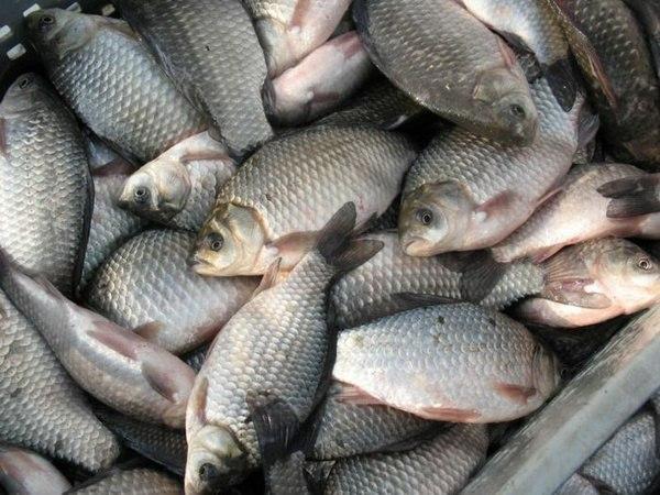 Донские ветинспекторы не пустили 830 кг рыбы без документов
