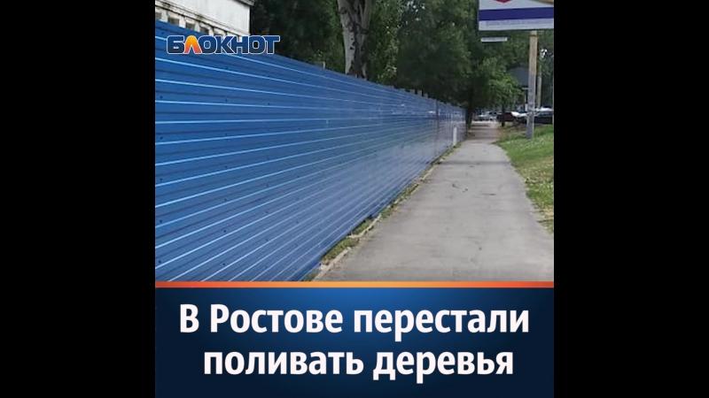 В Ростове перестали поливать деревья