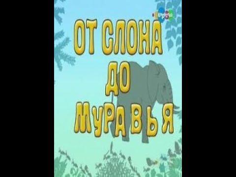 22 От слона до муравья. Зубры. Бизоны. Образовательное видео для детей.