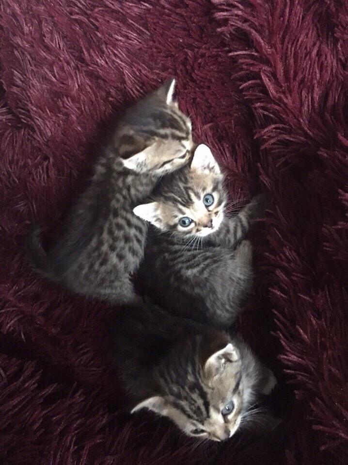 Котятки в добрые руки родились 17.