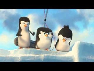 Пингвиненок Пороро  смотреть онлайн мультфильм бесплатно