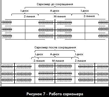mdRuBxi5GqA.jpg