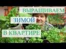 Выращивание зелени зимой в квартире