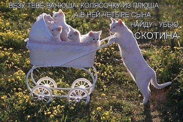 Кошачий юмор - Страница 12 _bWL0KP8pOs