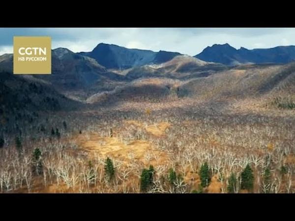 Сила природы Серия 6 Поиски Часть 1