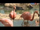 Андрияка С.Н. Уроки рисования 15. Фламинго.mp4