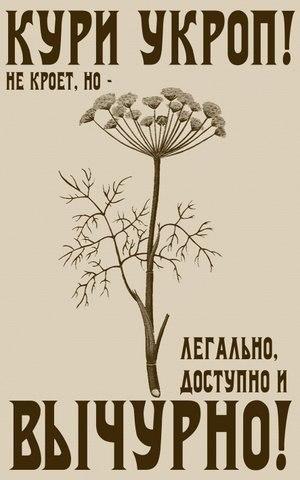 Святослав Сильный | Барнаул