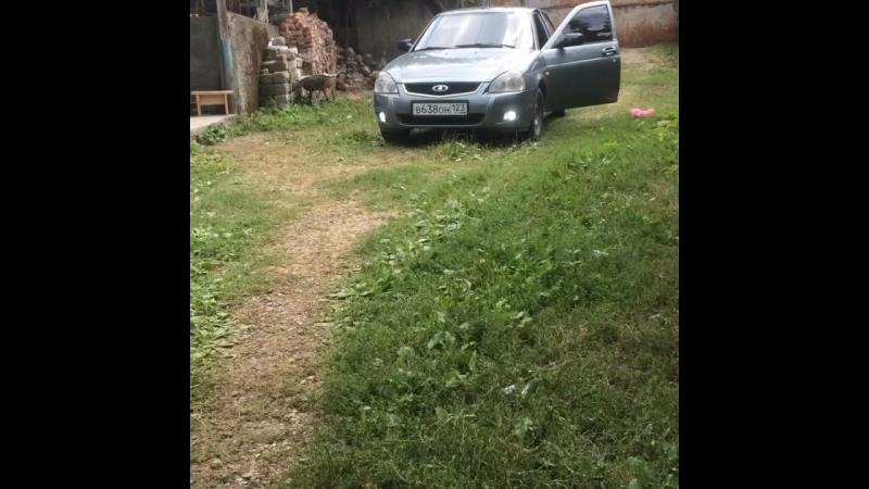 Грузия ласточка моя♥️😂