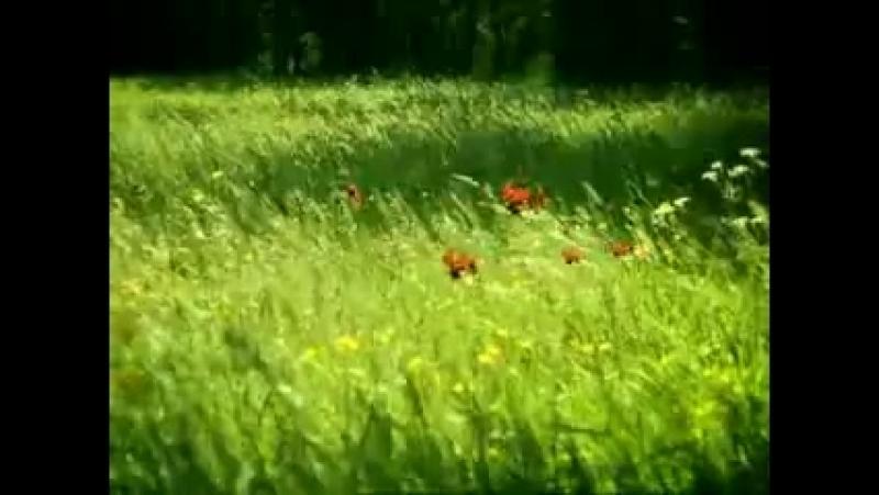 Minuscule (Букашки) 3 сезон » Freewka.com - Смотреть онлайн в хорощем качестве