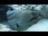 Scuba diving with Tako Diving Hurghada