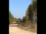 Казанскому тракту и увидел двух молодых лосей неподалеку от поселка Куяр.