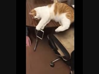 Bad kitty, good kitty