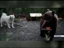 В Норильске медведь вышел в дачный поселок