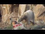 Медвежонок Кнут как бренд: права остаются за берлинским зоопарком