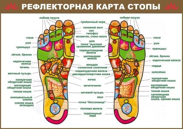 МАССАЖ СТОП Еще древние целители полагали, что массаж является средством профилактики, а зачастую и лечения, сотен тяжелейших заболеваний. В общем виде он осуществляет точечное воздействие на те части нашего тела, которые обладают повышенной биологической активностью. Массаж ног, и в особенности стоп, позволяет воздействовать на проблемные участки органов зрения, слуха, поднимать тонус, значительно улучшать общее самочувствие (см. Рефлекторную карту стопы). Детям массаж стоп вполне могут…