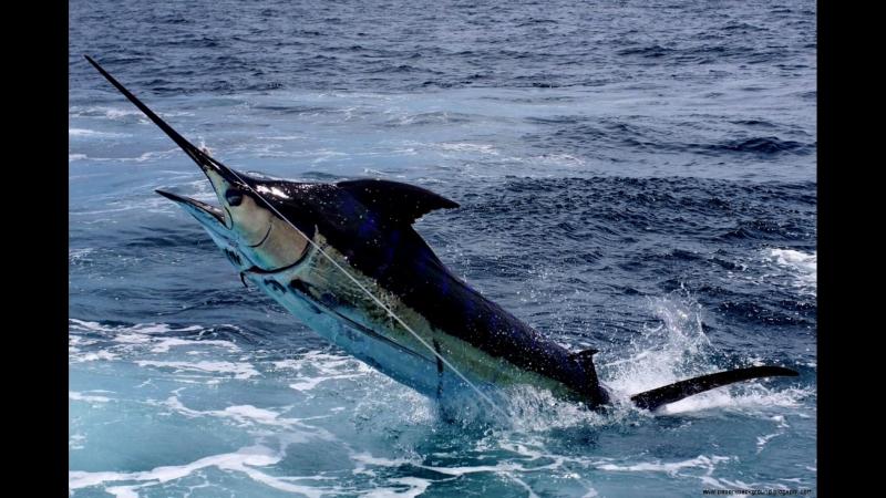 Рыбалка в Тихом океане Коста Рики