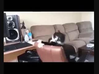 Когда ты кот (VHS Video)
