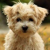 UA-DOG - собаки Украины. Любители собак