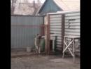 Собака танцует под песню Modern Talking