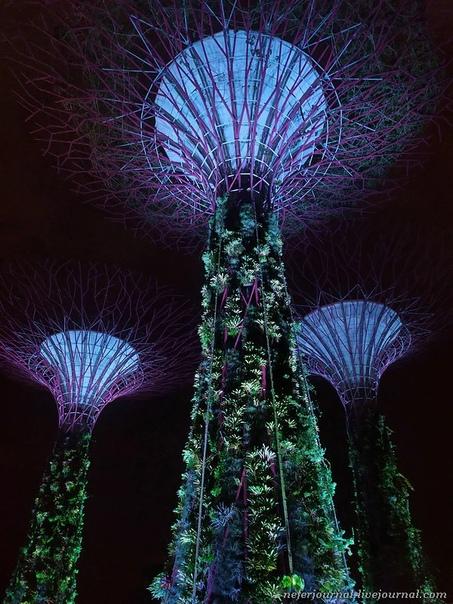 Супердеревья. Футуристический сад в Сингапуре.