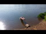 Деду Сашу взял отгулы за прогулы , решил с ездить на гаваи поплавать !!!