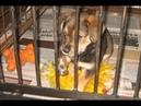 Самое одинокое сердце! Месячного щенка подбросили в приют, где никто к нему не подходил чтобы спасти
