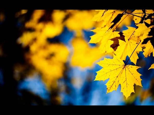 გია ყანჩელი ყვითელი ფოთლები Gia Yancheli Yellow leaves