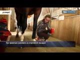 Конюшня на колесах и солярий для лошадей: проект «Галопом в Рио»