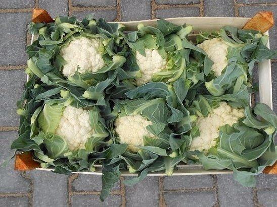 как вырастить цветную капусту сочной и крупной! способы выращивания цветной капустыесли говорить о том, как вырастить цветную капусту, то есть два способа: рассадный и семенной:при рассадном