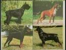 Собаки от А до Я: Дрессировка и выучка (2006)