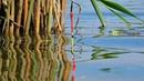 Поплавок Зачетная ловля крупного карася на удочку поплавчанку с мормышкой