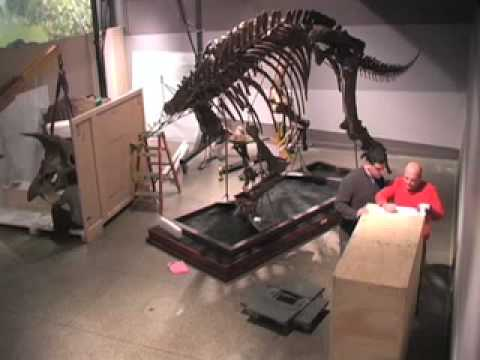 Triceratops Cliff Installed at the Museum of Science, Boston